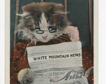 White Mountains * New Hampshire * Cat Reading The Paper * Linen * Vintage Postcard