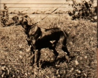 Vintage Collection of Dog Pictures (Set of 7)