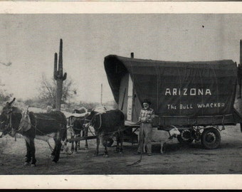 Arizona The Bull Whacker * Vintage Postcard