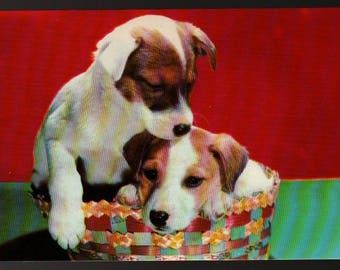Fox Terrier Pups * Vintage Lusterchrome Postcard