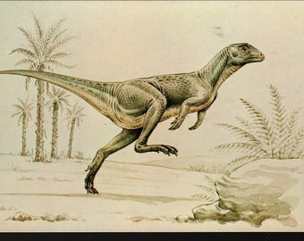 Fabrosaurus + British Museum + Vintage Postcard
