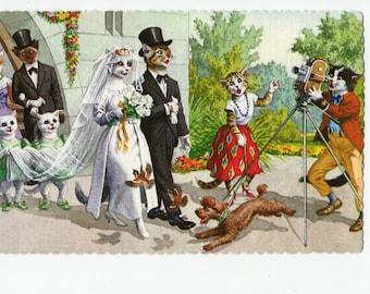 Mainzer Cats * Wedding Photographer * 4938 * Eugen Hartung * Spain * Unused * Vintage Postcard * Deckle Edge