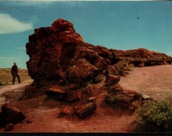 Old Faithful Log + Petrified Forest + Holbrook, Arizona + Bob Petley + Kodachrome + Vintage Postcard