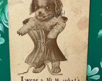 Dog in Corset * Humor * Flag Canceled Stamp * Victorian Postcard
