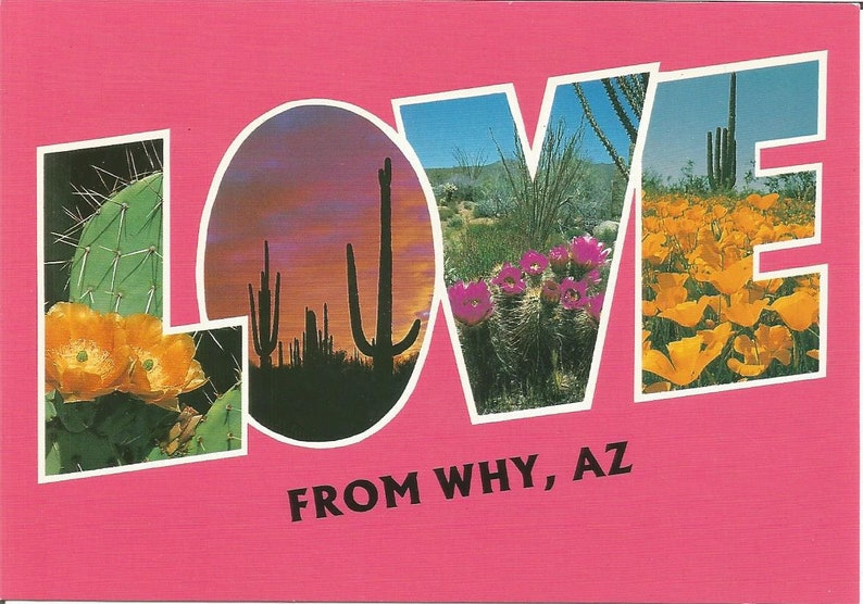 Vintage Postcards Why Arizona Coyote Animal Flora Cactus Flowers Poppies United States USA Photochrome Postally Unused More Styles