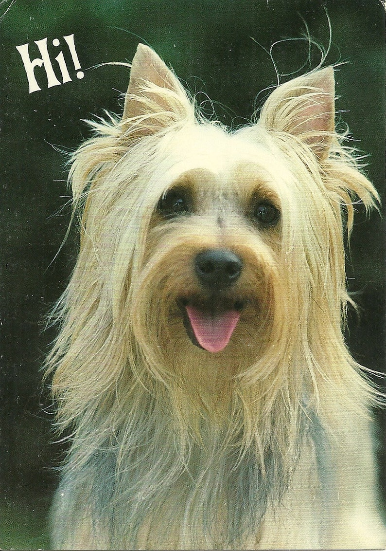 Vintage 1980s Postcard HI Sweet Dog Puppy Furry Friend Cute Pet Animal Greeting Card Photochrome Era Postally Unused