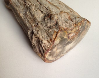 Genuine Petrified Wood Stone Specimen with Polished End