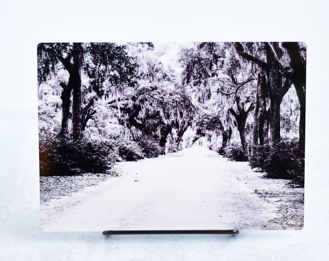 Black and White Cemetery Path Metal Art Print