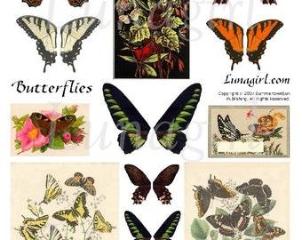 BUTTERFLY WINGS digital collage sheet, Victorian Garden, nature Fairies, Woodland Butterflies, Orange Brown, altered art, ephemera DOWNLOAD