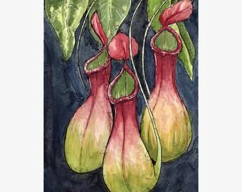 Original Watercolor Painting - Pitcher Plant - Carnivorous flowers - watercolour art by Ela Steel