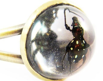 Exotic Jewel Beetle Cuff
