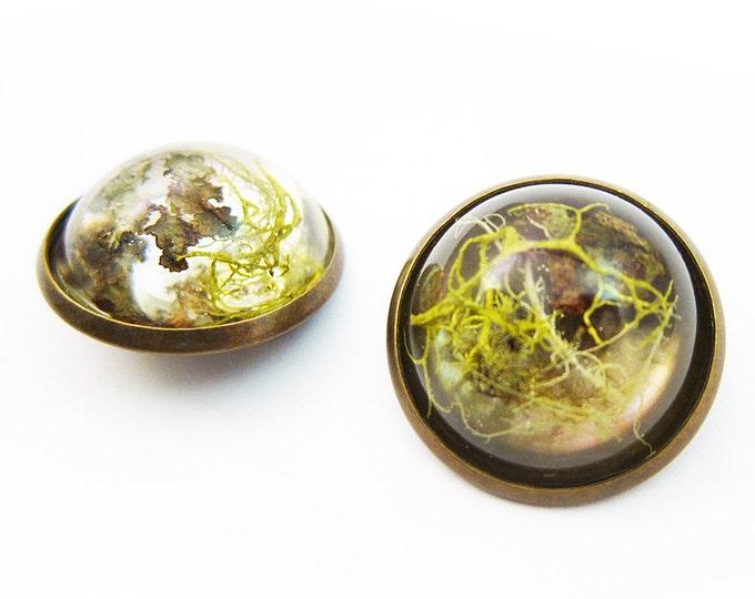 Terrarium Brooch Pin