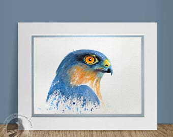Sparrowhawk - Watercolour Painting Bird Art in a Gift Box