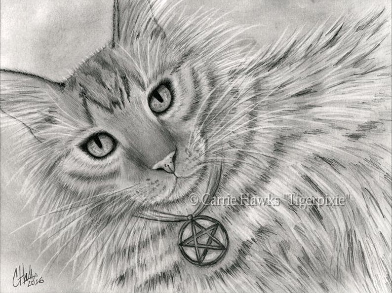 Long Haired Tabby Cat Tarot Art Cat Portrait Drawing Page of image 0