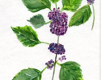 American Beauty Berries Watercolor Painting original art  8 x 10  American Beautyberry Callicarpa Americana L.