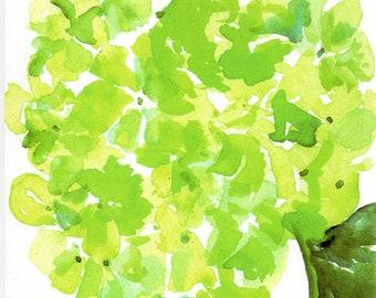 Green hydrangea art print 8 x 10 flower watercolor print