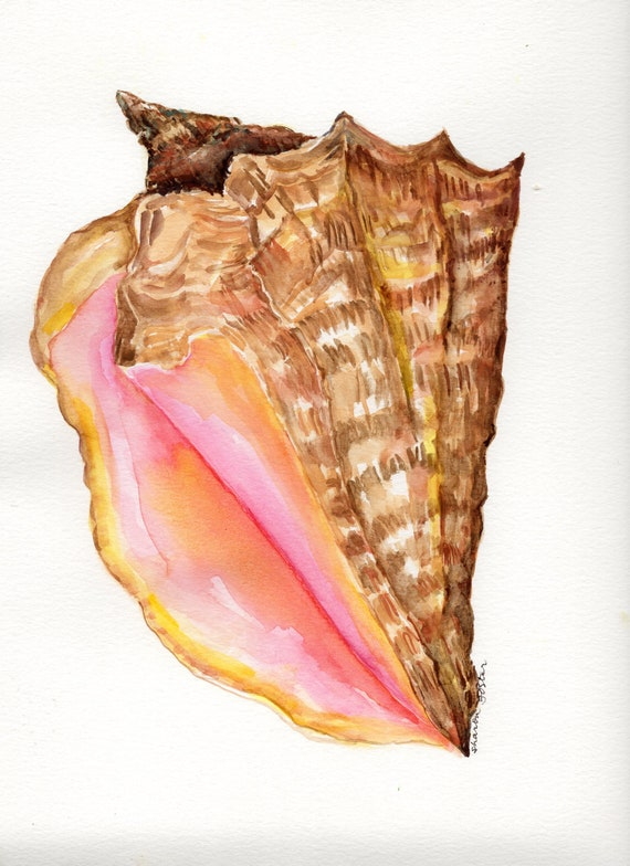 ACEO original watercolour painting conch shell collectable art trading card beach series