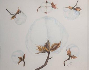 Square Cotton watercolor painting, cotton boll  original, Cotton plant art 11 x 11 botanical watercolor