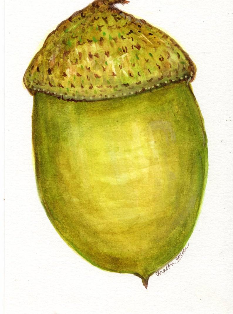 Original  Acorn Watercolor Painting Fall artwork 5x7 Autumn image 0