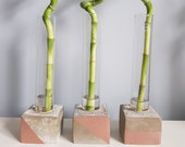 Concrete and test tube industrial vase with lucky bamboo