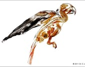Print of a bird anatomy plastinate or other plastination specimen of your choice