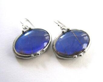 Oval Blue Morpho Butterfly Earrings