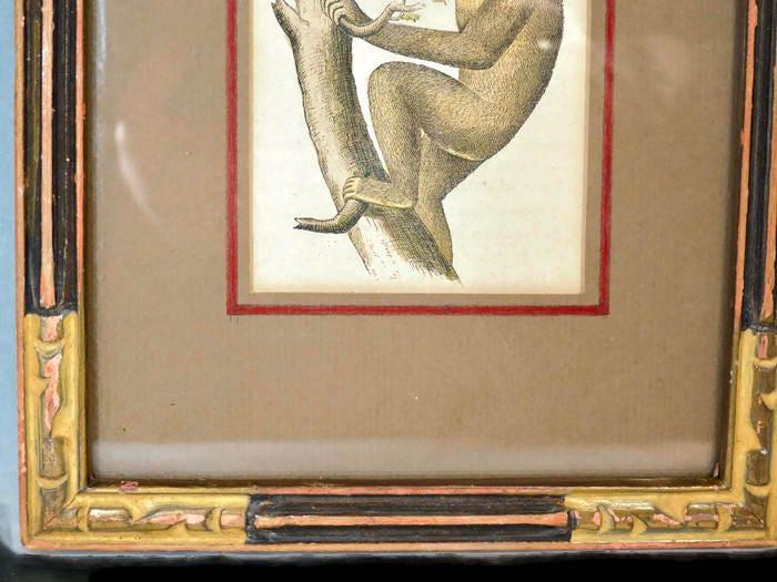 Image 2 of Antique Framed Chimpanzee Art Print