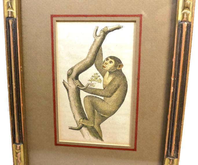 Image 4 of Antique Framed Chimpanzee Art Print