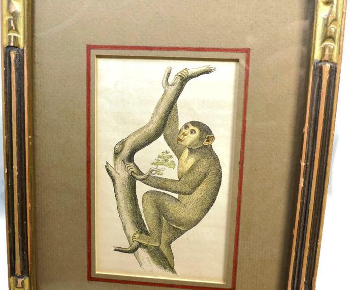 Image 5 of Antique Framed Chimpanzee Art Print