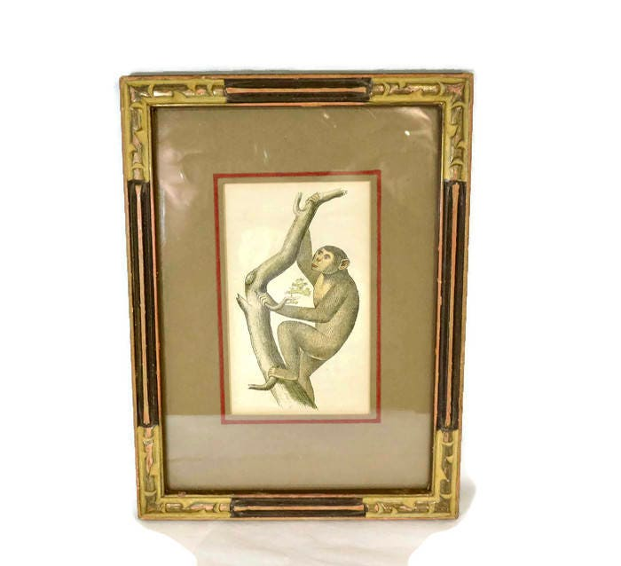 Antique Framed Chimpanzee Art Print