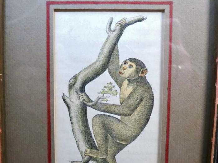 Image 6 of Antique Framed Chimpanzee Art Print