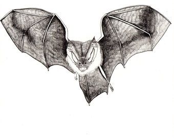 BAT Flying Brown Bat ORIGINAL Artwork Black and White Ink Drawing on Paper 8 x 8