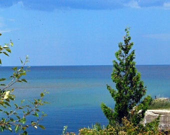 Lone Pine Overlooking Lake Huron