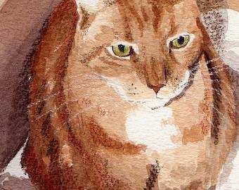 D in a Box, a Watercolor Painting....... Custom Pet Portraits