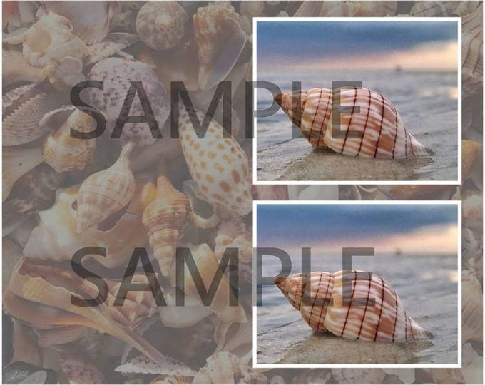 Shell Greeting Card and Gift Tags Digital