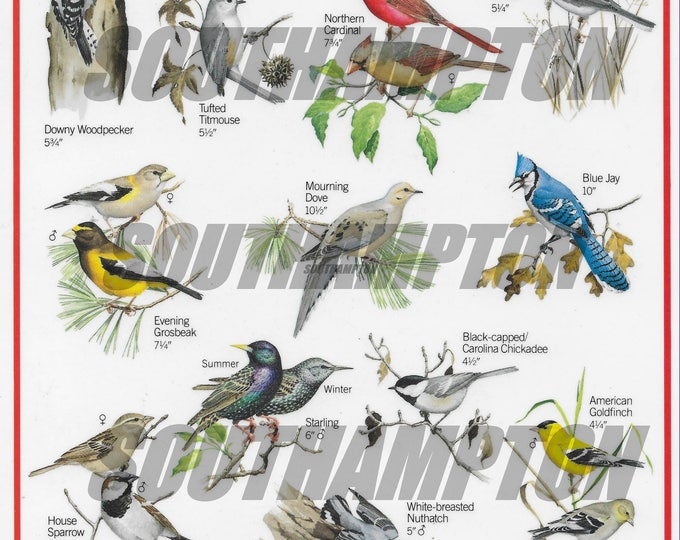 Bird Identifier Digital Download