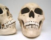Realistic ceramic miner human skull