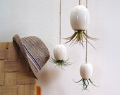 Hanging Air Plant Pod Planter (tm) TRIO  - Gorgeous Glossy White