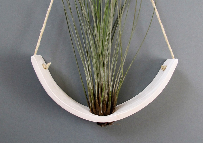 Hanging Air Plant Cradle tm  Natural White Earthenware image 0
