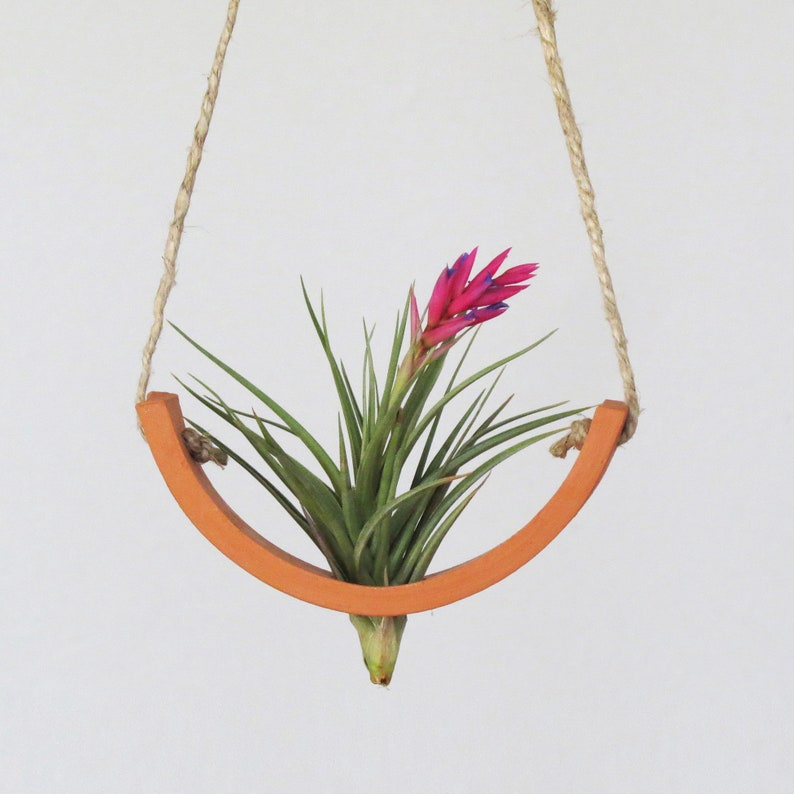 Small Hanging Planter Air Plant Cradle  Natural TerraCotta image 0