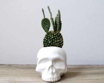 Human Skull Ceramic Planter - perfect for cactus succulent or air plant