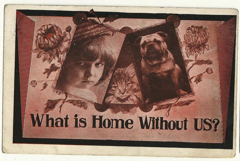 Vintage cat dog grumpy kid home postcard frenchie bulldog image 0