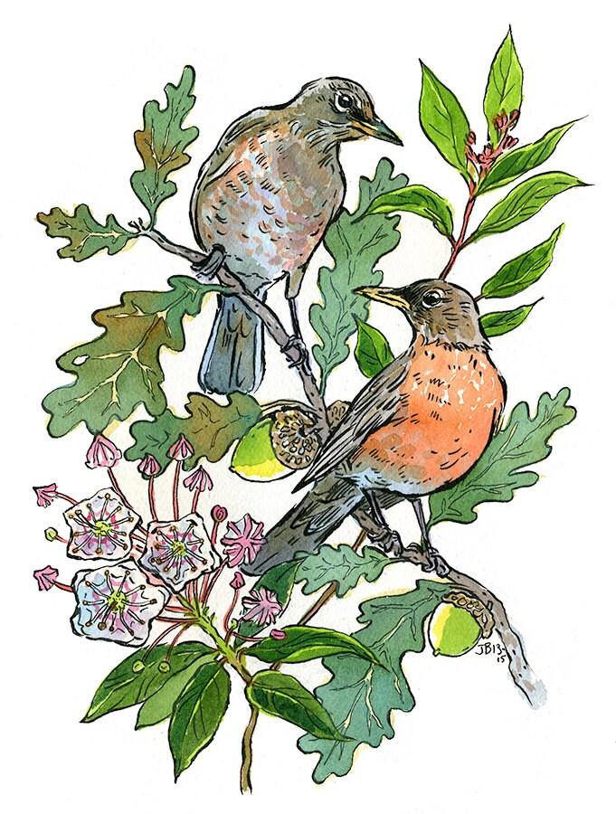 Connecticut State Symbols Bird Robin Flower Mountain Laurel Etsy