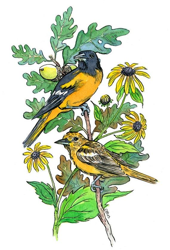 Maryland State Symbols Bird Baltimore Oriole Flower Black Etsy