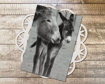 """Mother and Child Burros Fine Art Photography Postcard, Nature, Wild Donkey, Parent, Little One, Love, Caring, New Arrival - 4.125"""" x 5.75"""""""