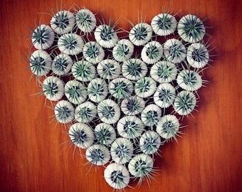 party favor // qty. 25 //  air plant // sea urchins
