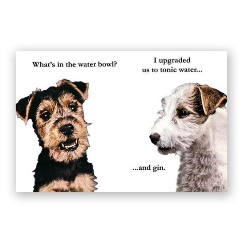Gin /& Tonic Dogs Postcards Stocking Stuffer Humor Set of 12 Gift