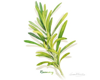 Rosemary print, 5X7 Herb watercolor print, Kitchen art, Herb illustration, Art for kitchen, Culinary Herb artwork, Home decor, Wall décor