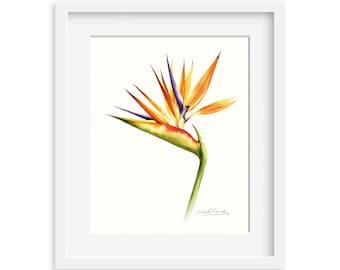 Birds of Paradise Flower 8 by 10 print - Archival Print, 8X10 floral watercolor art print, floral artwork, home decor, wall décor
