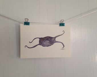 Original Mermaid's Purse Watercolor and Ink Painting, Small Skate Egg Case Painting, Beach Watercolor, Small Postcard Painting, Wall Decor